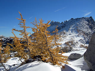 Larches in the Enchantments