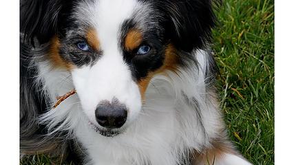 Heidi with Stick