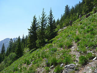 Descending steep meadows to the Beauty Creek trail
