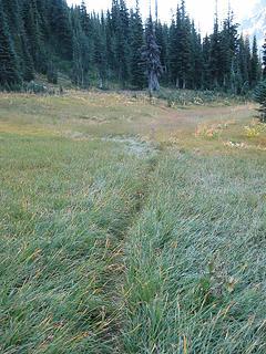 trail thru a meadow