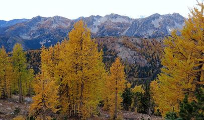 High overcast shadowing the ridges of larches