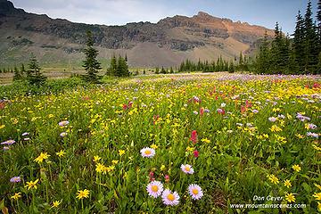 Meadows below Mt. Kipp