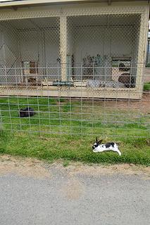 Bunnies tormenting captive tigers