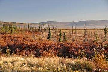 view from Dalton Highway