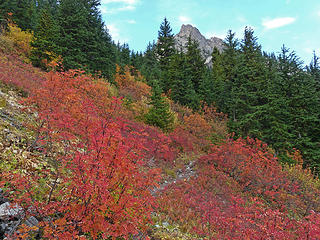 Fall color near Easy Pass