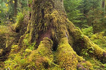 South Fork Hoh River Trail, Washington