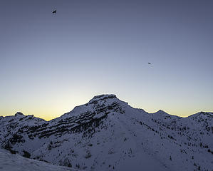 ravens over Coldwater Peak