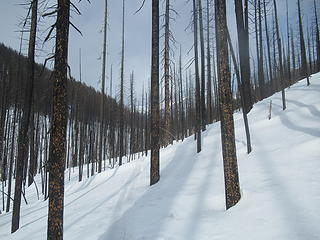 skinning through the burnt forest