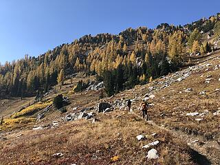 Heading to more Larch