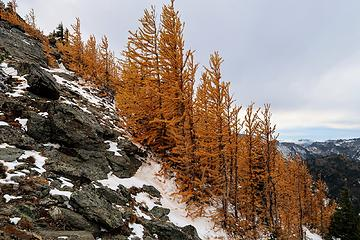 Larches along the ridge
