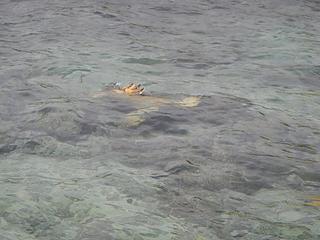 green sea turtle foot