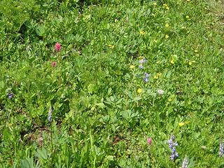 Flowers at Crystal Lake.