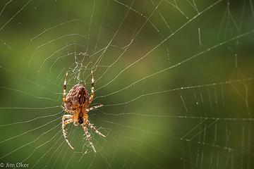 Woven Web (1 of 1)