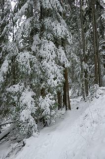 Snowy trail upward