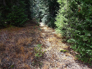Walking to the east side of the meadow where the ridge narrows we found some tread.
