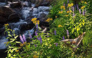 Wildflowers and cascades along JMT