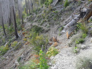 looking back at the trail regrade above a steep dropoff into the river.