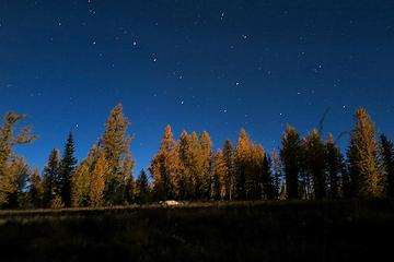 Big dipper above moonlit larches