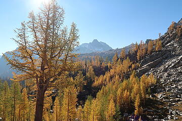 larches and Cardinal Peak