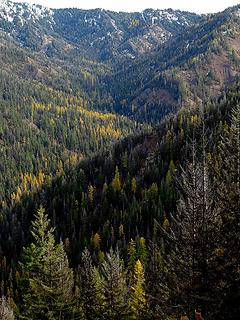 Larches up the North Fork Bear Creek
