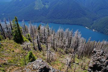 Lake Cushman from Mount Rose, 4300 feet