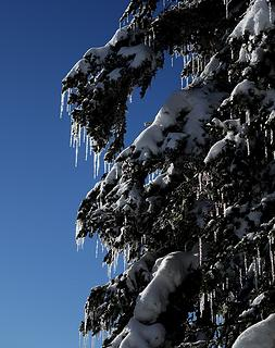 Tree icicles against shining against the blue sky