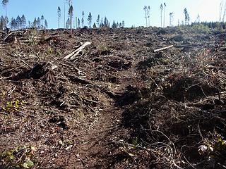 Trail through clearcut.