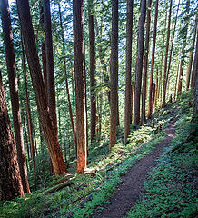 My favorite spot on the Dingford Creek trail which I call Cathedral Grove