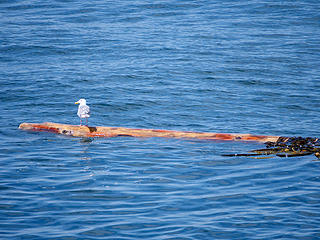 Bird on a Log