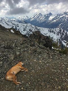 summit napper #1