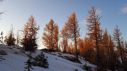 Larches were still yellow on the ridge