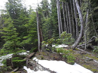 reached the ridge line at the transitions between two different clearcuts