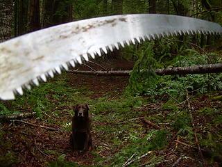 Prepare fer some sawin'
