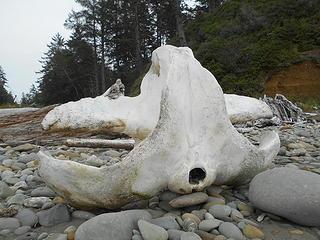 Kalaloch Beach 6 Steamboat Creek 092519 01