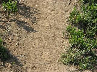 My footprints in the dust on Crystal Peak trail.