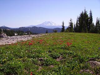 Fork w/ Snowgrass Trail, Mt. Adams
