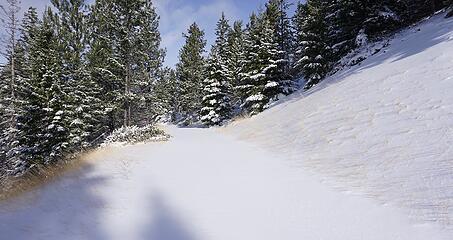 Near Upper Trailhead