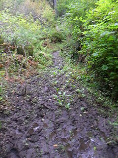 there were many sections of mud like this.  Many sections...