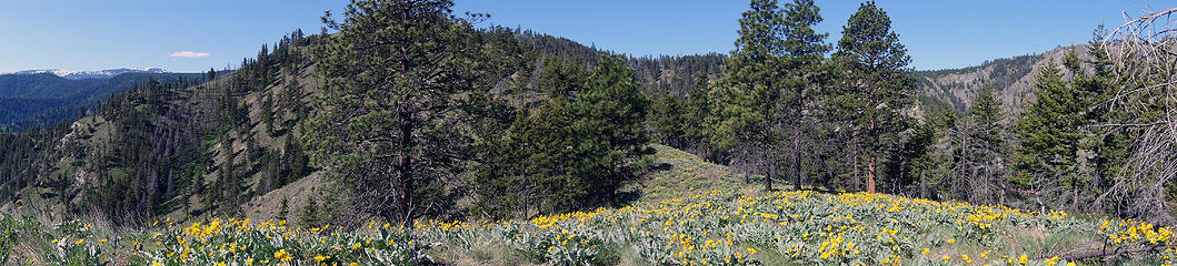 Walking through wildflowers on Chopper Ridge.