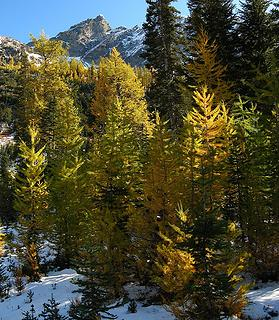 Amid the larches
