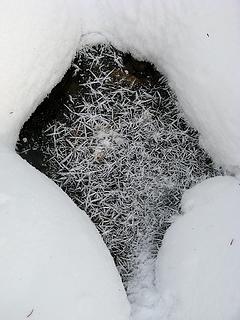Frost needles on stream ice