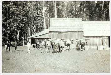 Smith Place - Queets Valley - ca. 1929 - view north of barn - photo courtesy L. Vaughan