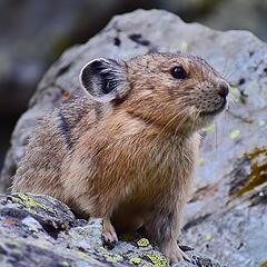 Cutest creature in Colorado