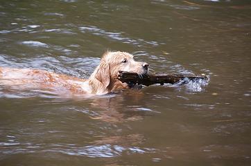 DSE_4208 - Water dog at play