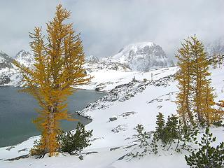 Larches & North Spectacle