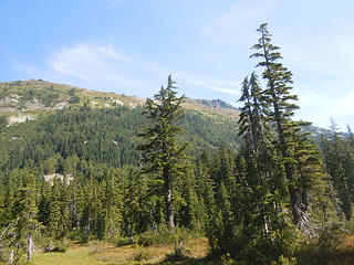 Townsend from Paradise Meadows