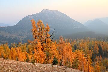 A bigger larch tree along the way