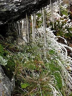 Icicles & ghost plants