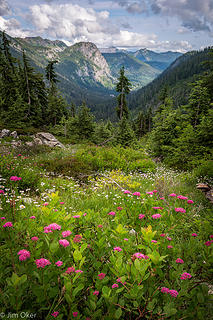 Alpental Valley Flower View (1 of 1)