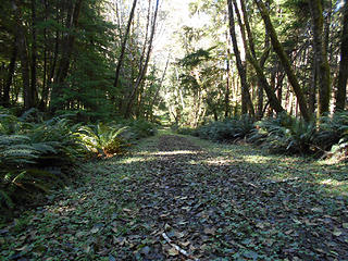 Road-to-Trail Long Island - Willapa Bay National Wildlife Refuge Sept 19 2013